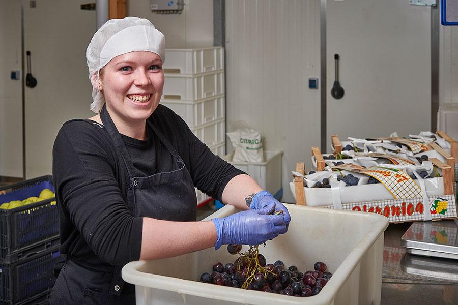 Vorbereiten der Weintrauben